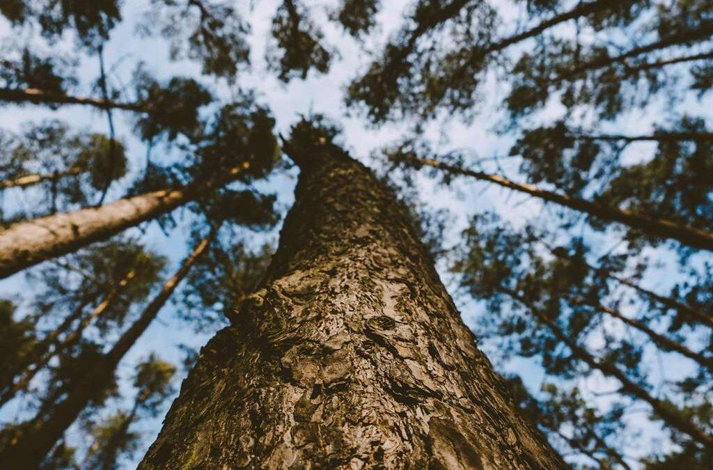 Usługi Arborystyczne