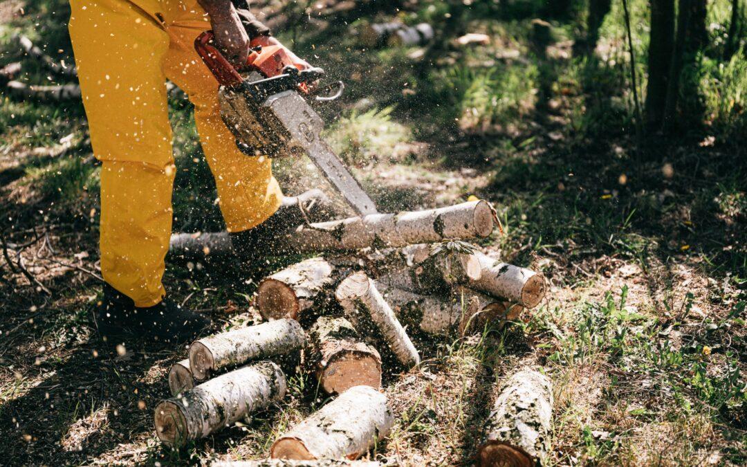 Ścinamy drzewa i krzewy – arborystyka
