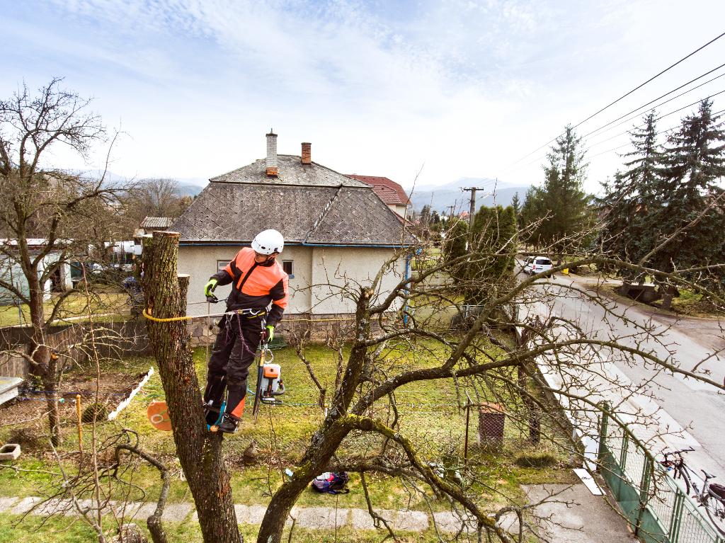 Wycinka drzew Świdnica