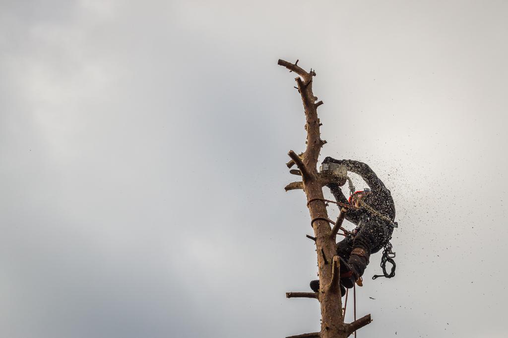 Wycinka drzew Ząbkowice Śląskie