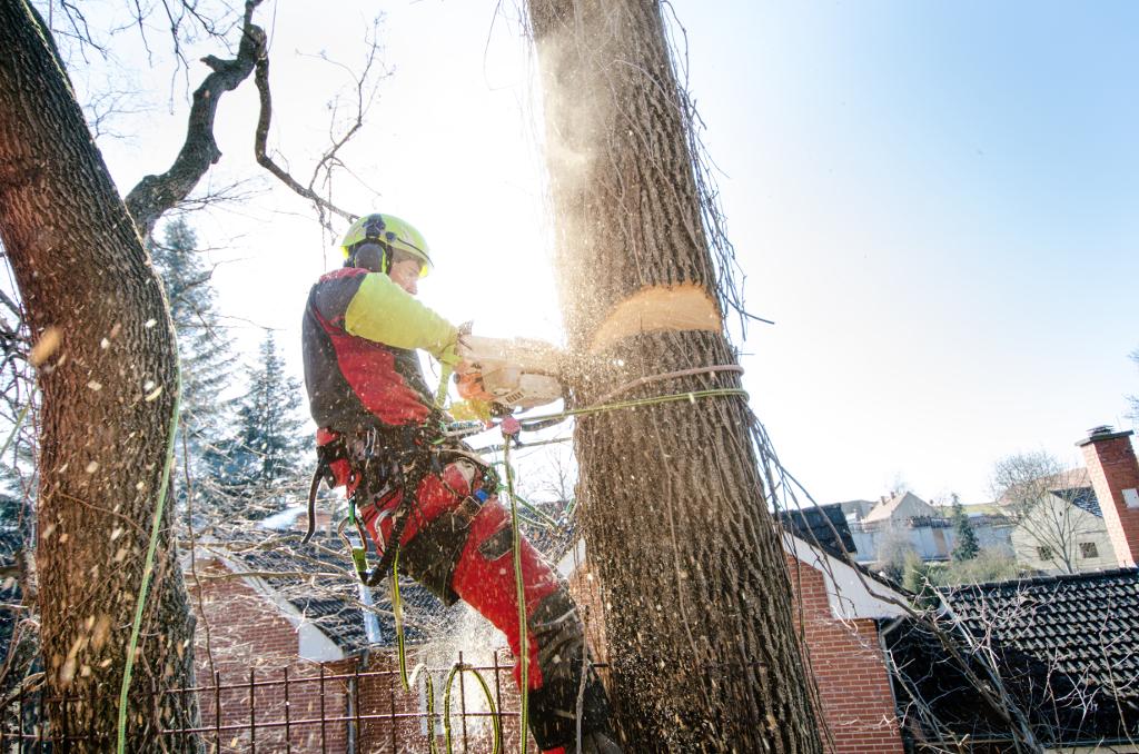 Wycinka drzewa Strzegom